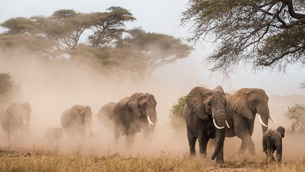 baby elephant backgrounds